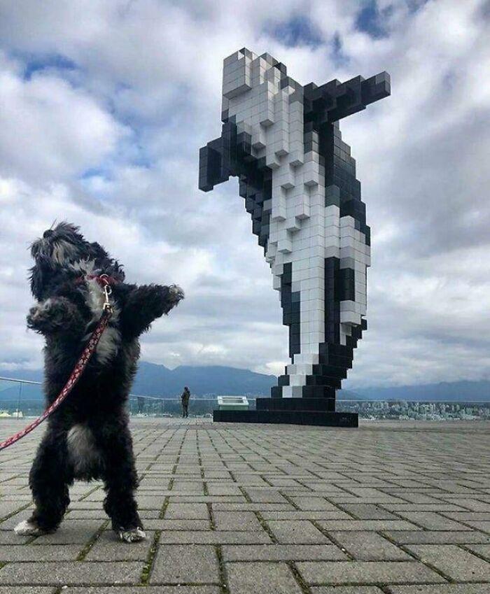 57 fotos hilárias de cachorro para colocar um sorriso em seu rosto 44