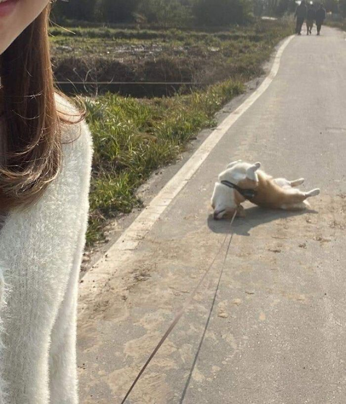 57 fotos hilárias de cachorro para colocar um sorriso em seu rosto 45