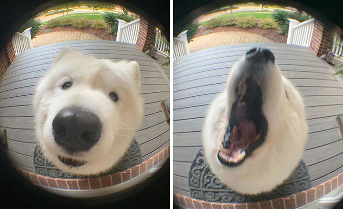 57 fotos hilárias de cachorro para colocar um sorriso em seu rosto 53