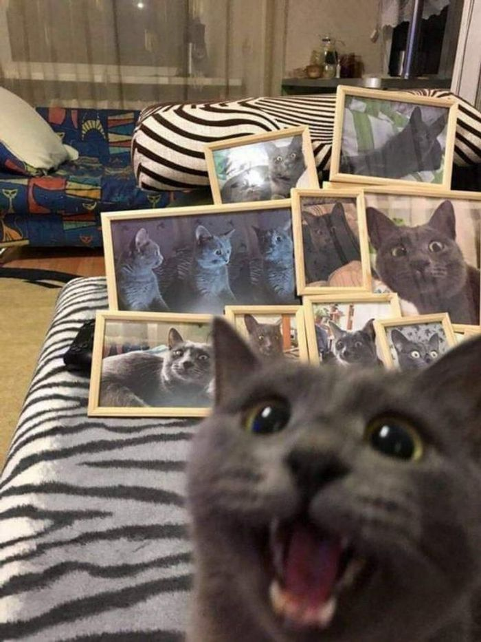 20 fotos que foram tiradas no momento certo 20