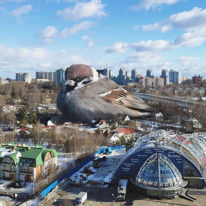30 montagem de fotos inesperadas com animais gigantes por Vadim Solovyev 2