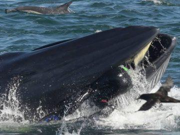 O Homem que foi engolido por uma baleia 5