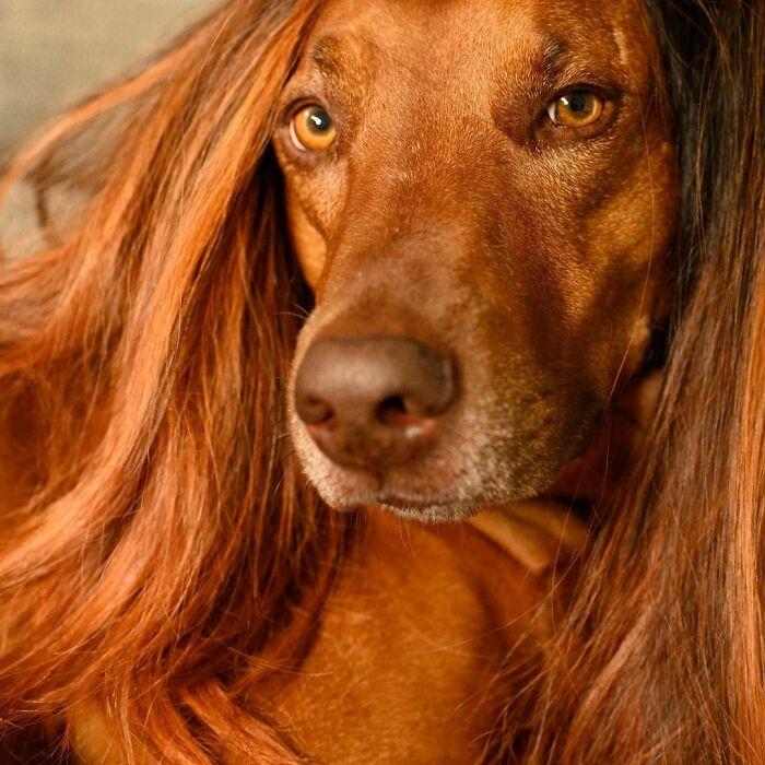 38 pessoas estão compartilhando fotos de seus cães usando perucas 6