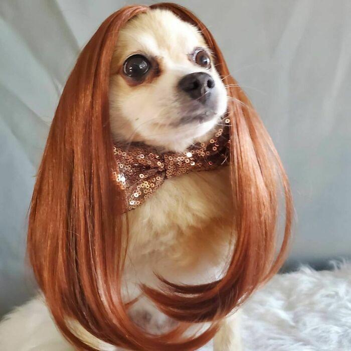 38 pessoas estão compartilhando fotos de seus cães usando perucas 10