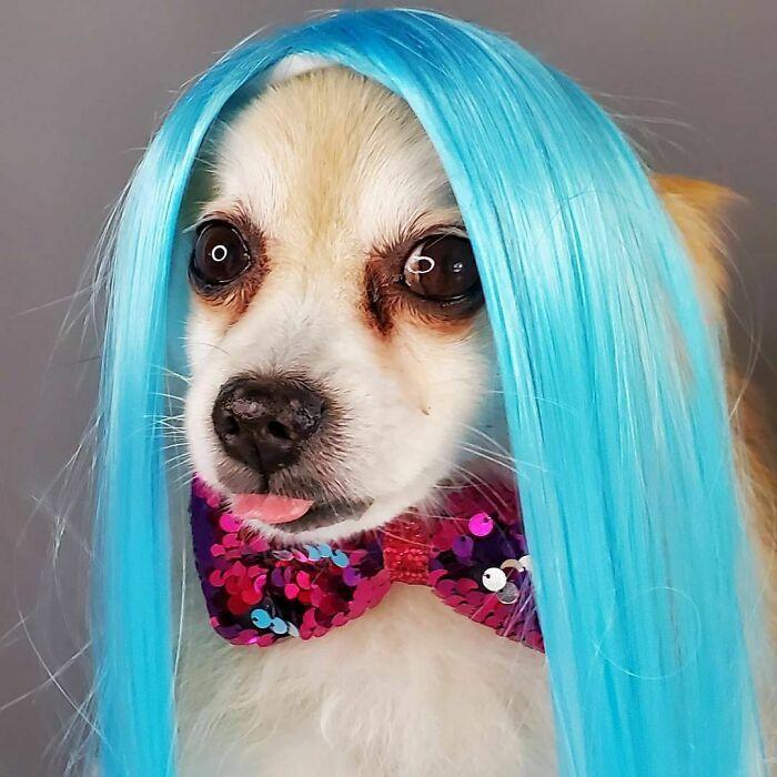 38 pessoas estão compartilhando fotos de seus cães usando perucas 17