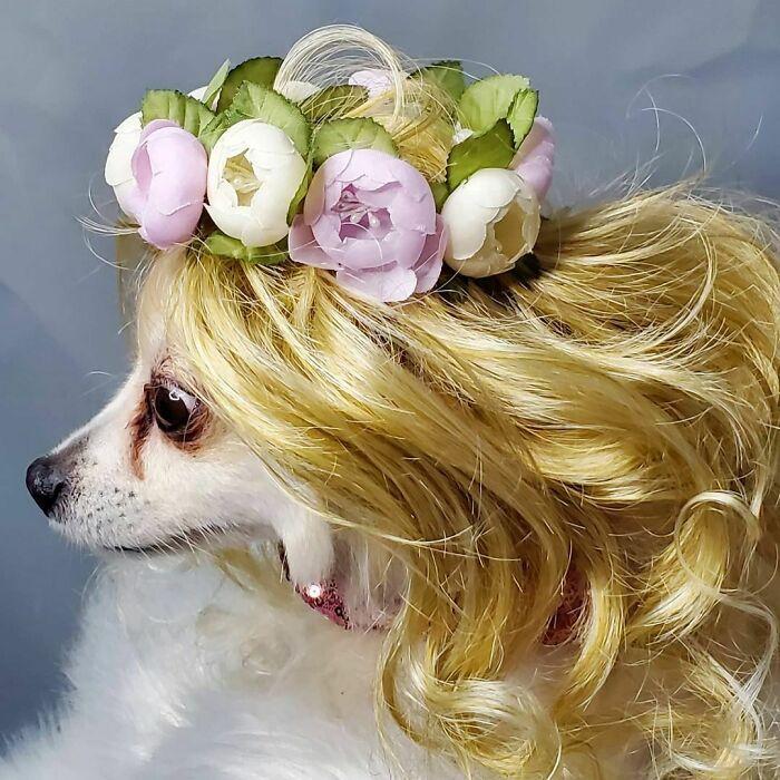 38 pessoas estão compartilhando fotos de seus cães usando perucas 19