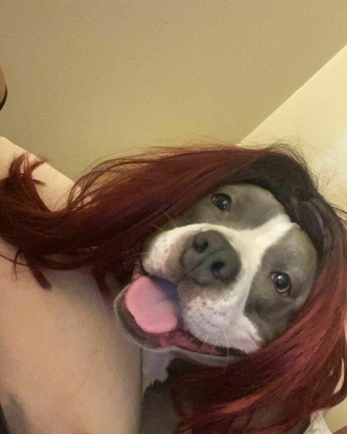 38 pessoas estão compartilhando fotos de seus cães usando perucas 26