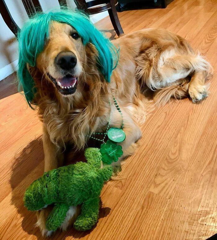 38 pessoas estão compartilhando fotos de seus cães usando perucas 28