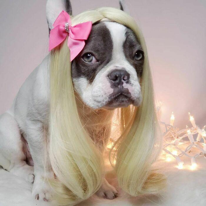 38 pessoas estão compartilhando fotos de seus cães usando perucas 30