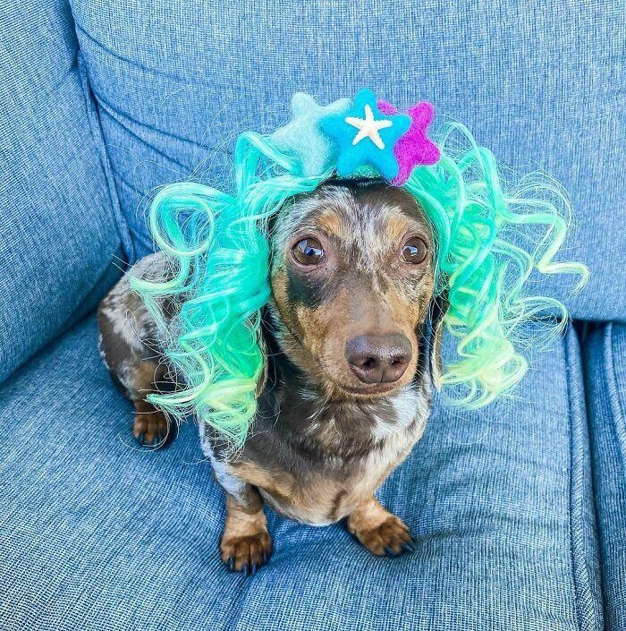 38 pessoas estão compartilhando fotos de seus cães usando perucas 31