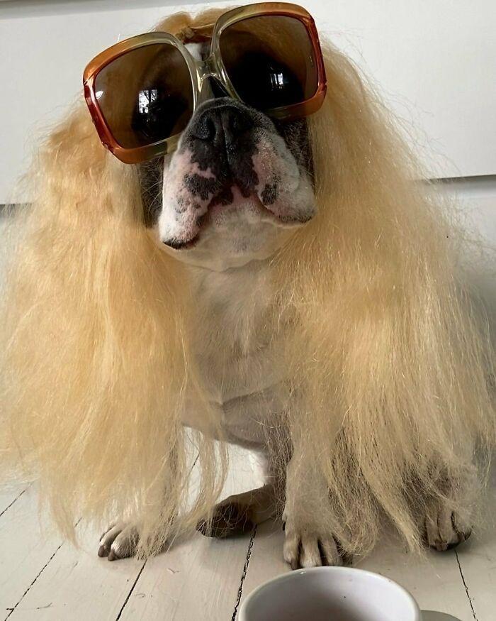 38 pessoas estão compartilhando fotos de seus cães usando perucas 35