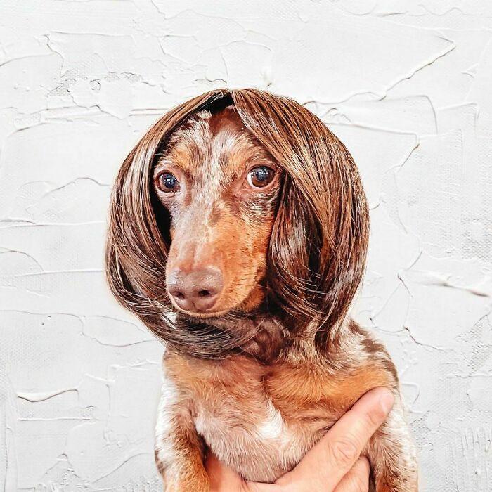38 pessoas estão compartilhando fotos de seus cães usando perucas 37