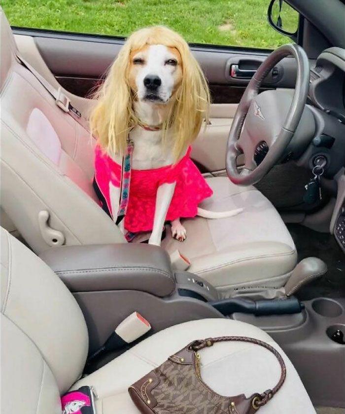 38 pessoas estão compartilhando fotos de seus cães usando perucas 39