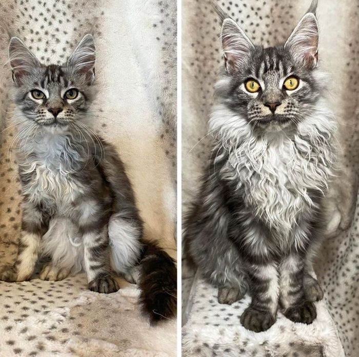 15 antes e depois de animais de estimação que foram resgatados 5