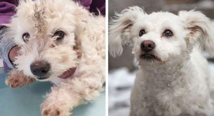 15 antes e depois de animais de estimação que foram resgatados 6