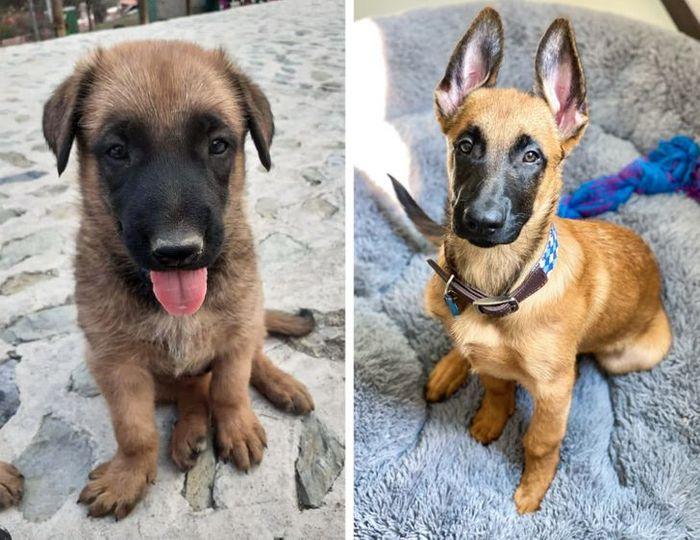 15 antes e depois de animais de estimação que foram resgatados 8