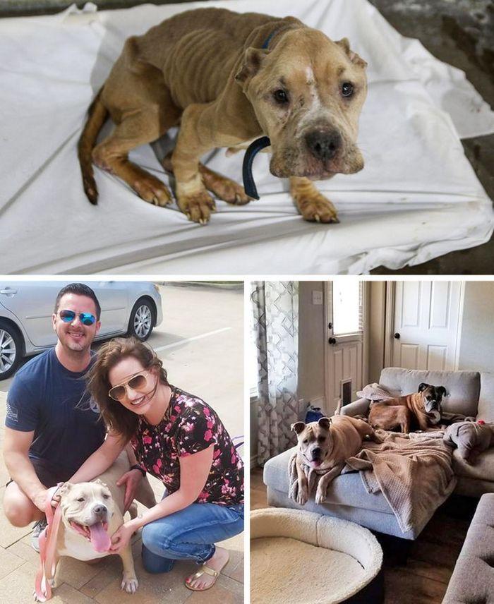 15 antes e depois de animais de estimação que foram resgatados 10