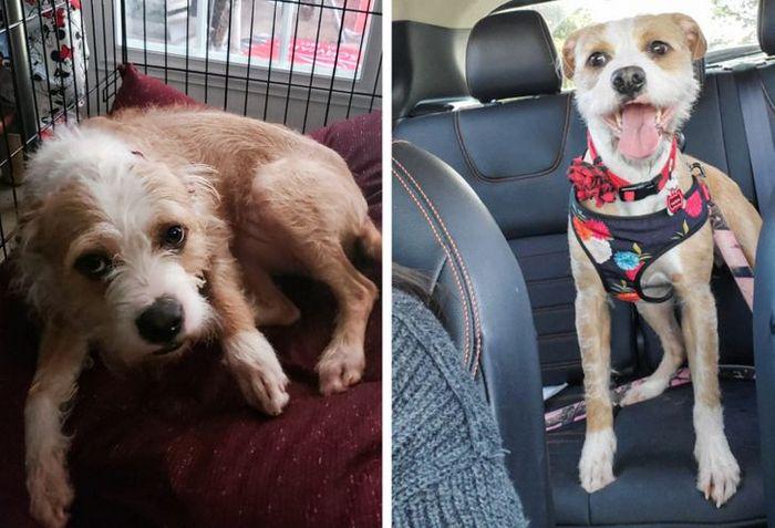15 antes e depois de animais de estimação que foram resgatados 11