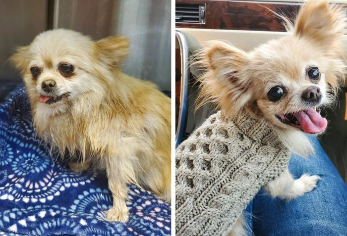 15 antes e depois de animais de estimação que foram resgatados 13