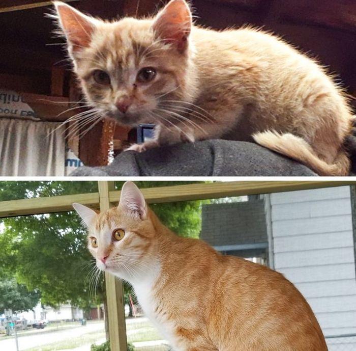 15 antes e depois de animais de estimação que foram resgatados 15