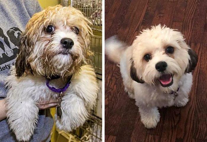 15 antes e depois de animais de estimação que foram resgatados 16