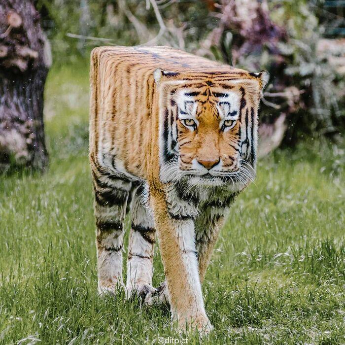 Artista muda animais para terem a forma de cubos (38 fotos) 6