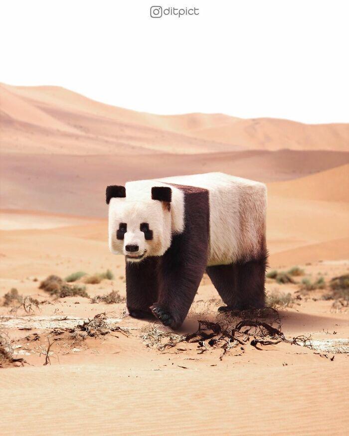 Artista muda animais para terem a forma de cubos (38 fotos) 8