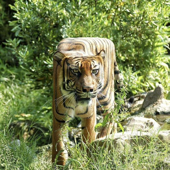 Artista muda animais para terem a forma de cubos (38 fotos) 14
