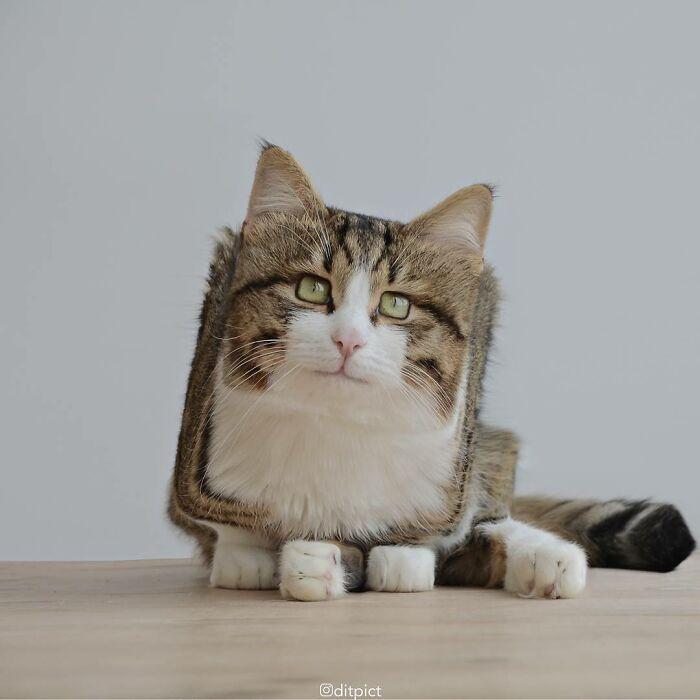 Artista muda animais para terem a forma de cubos (38 fotos) 16