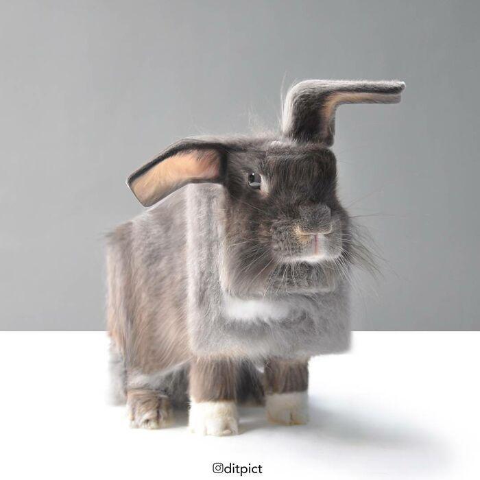 Artista muda animais para terem a forma de cubos (38 fotos) 17