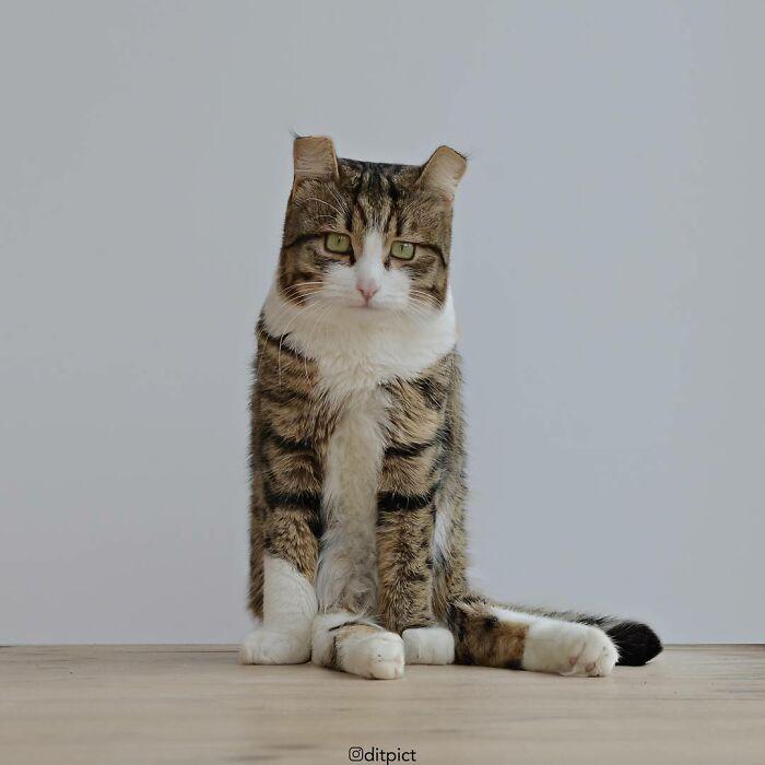Artista muda animais para terem a forma de cubos (38 fotos) 18