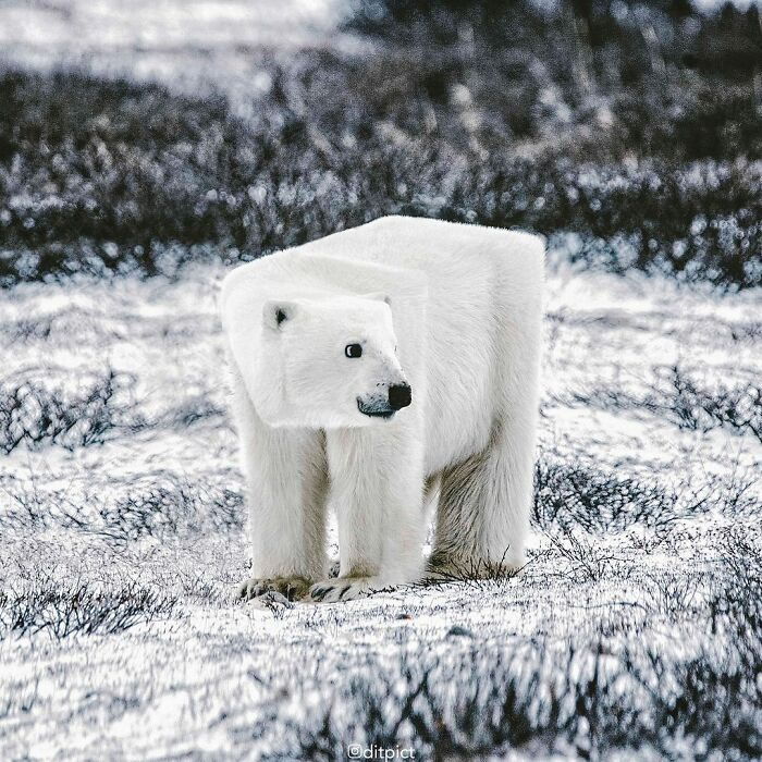 Artista muda animais para terem a forma de cubos (38 fotos) 22