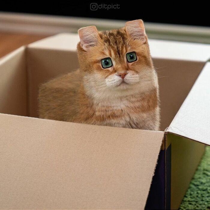 Artista muda animais para terem a forma de cubos (38 fotos) 27