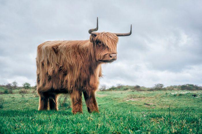 Artista muda animais para terem a forma de cubos (38 fotos) 36