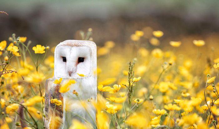 Artista muda animais para terem a forma de cubos (38 fotos) 37
