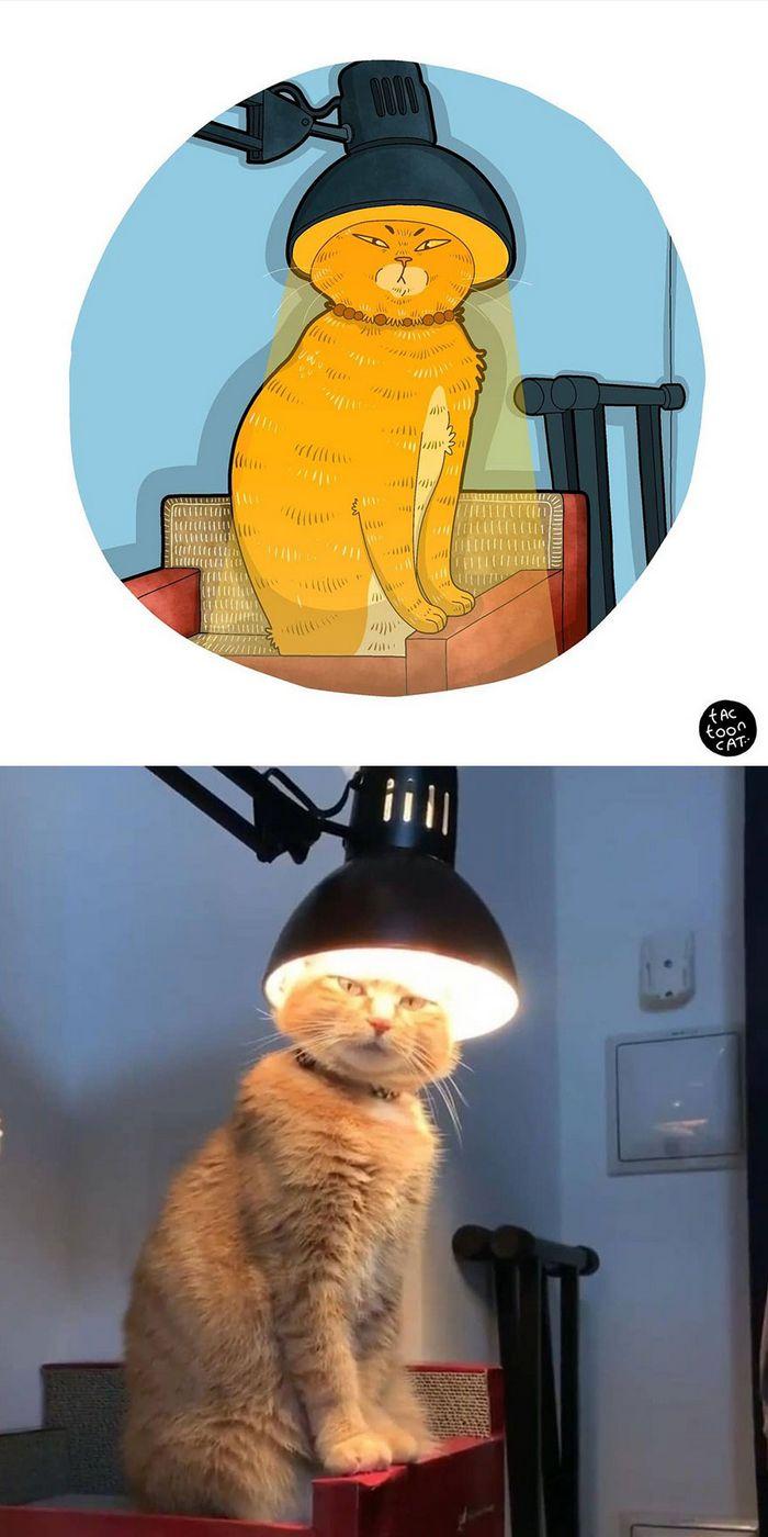Artista transforma fotos engraçadas de gatos em ilustrações (35 fotos) 13