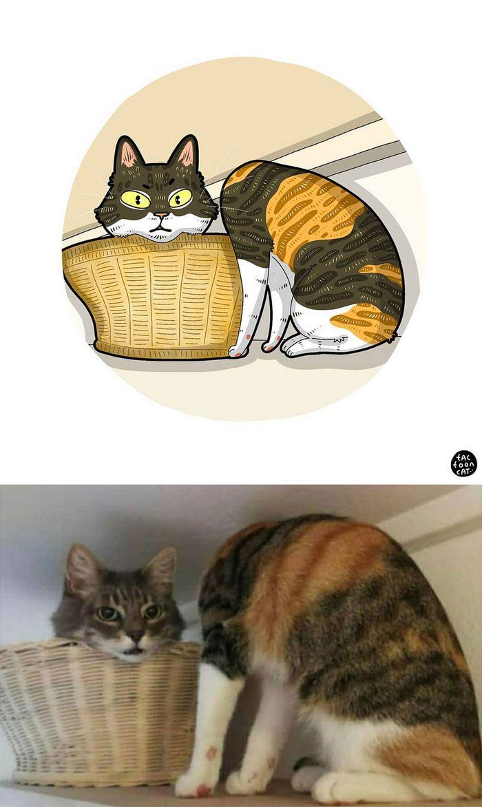 Artista transforma fotos engraçadas de gatos em ilustrações (35 fotos) 18