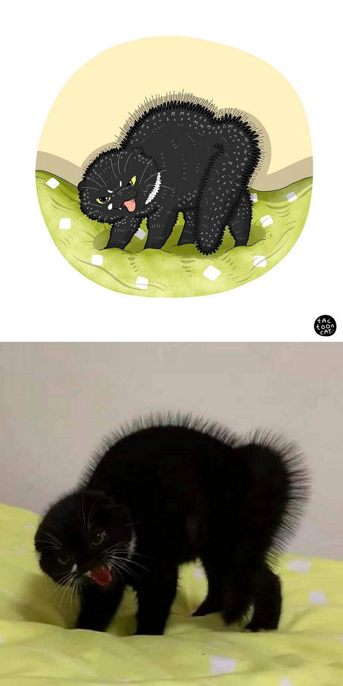 Artista transforma fotos engraçadas de gatos em ilustrações (35 fotos) 24