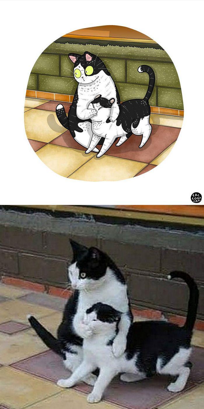 Artista transforma fotos engraçadas de gatos em ilustrações (35 fotos) 31