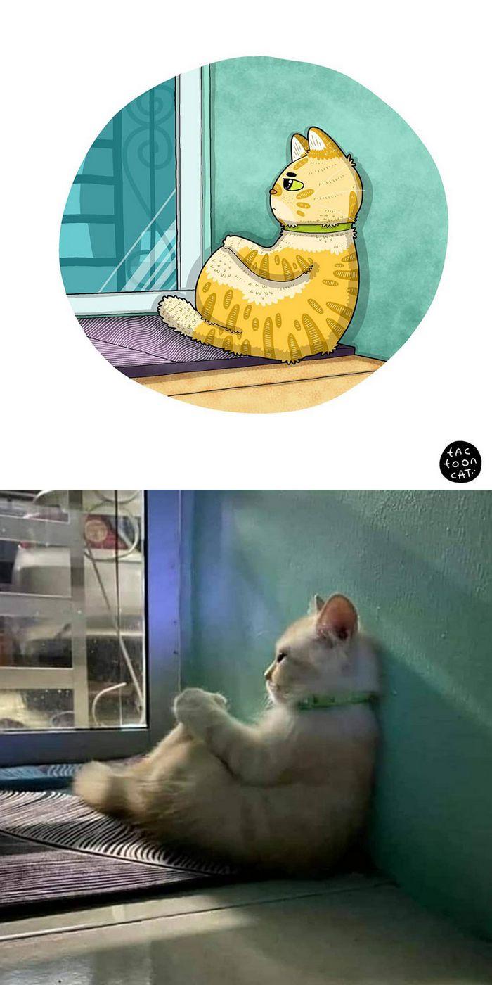 Artista transforma fotos engraçadas de gatos em ilustrações (35 fotos) 32