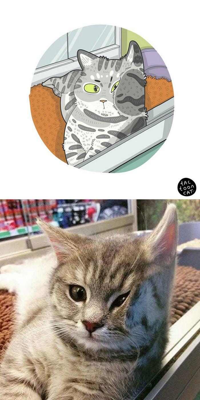 Artista transforma fotos engraçadas de gatos em ilustrações (35 fotos) 34