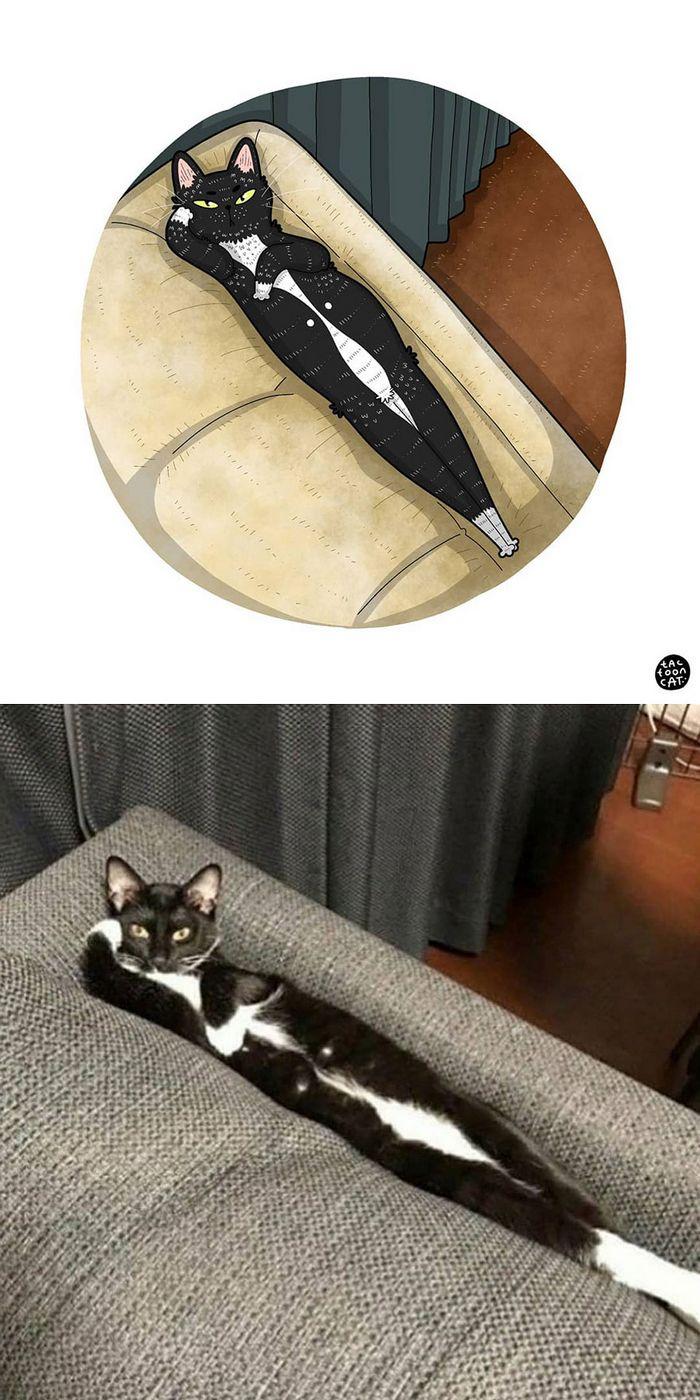 Artista transforma fotos engraçadas de gatos em ilustrações (35 fotos) 35