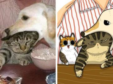 Artista transforma fotos engraçadas de gatos em ilustrações (35 fotos) 20