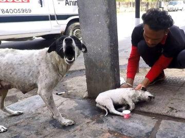 Cadela latia por socorro para seu filhote ferido e o que aconteceu foi emocionante 4