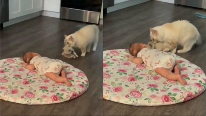 Gata leva seu filhote para ficar junto com bebezinho 2