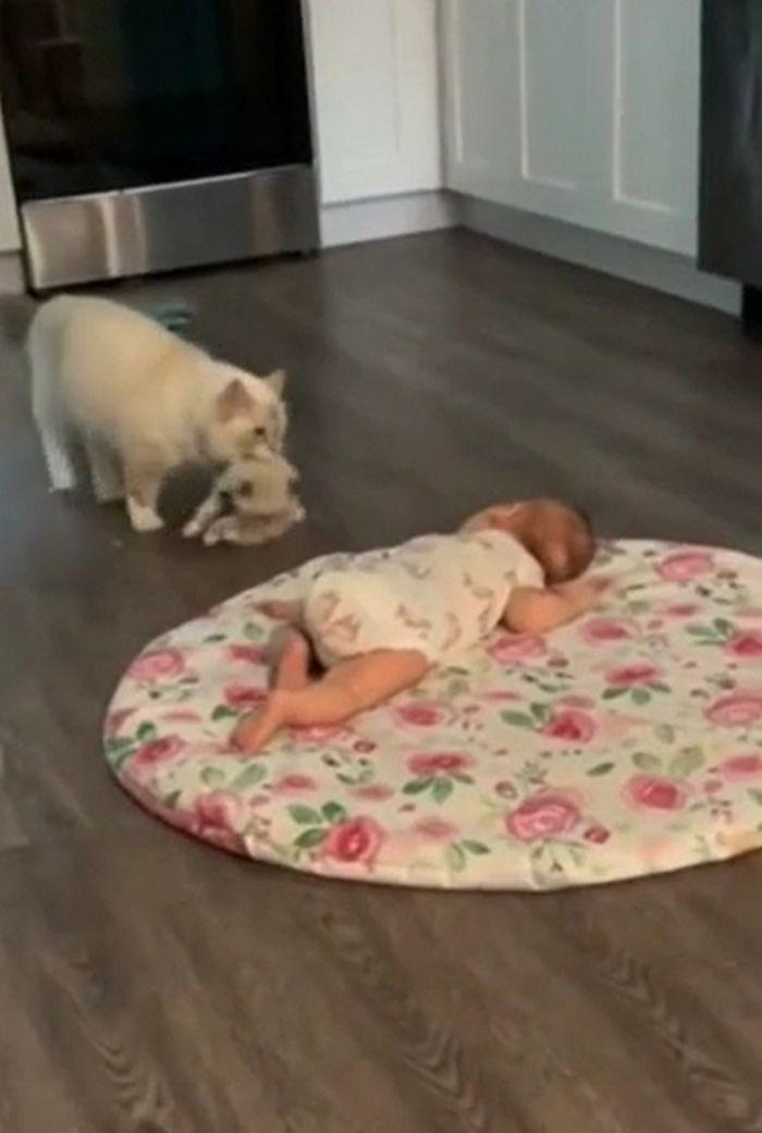 Gata leva seu filhote para ficar junto com bebezinho 3