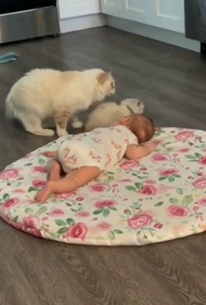 Gata leva seu filhote para ficar junto com bebezinho 4