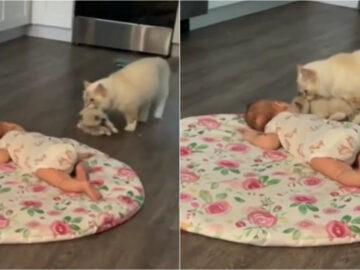 Gata leva seu filhote para ficar junto com bebezinho 8