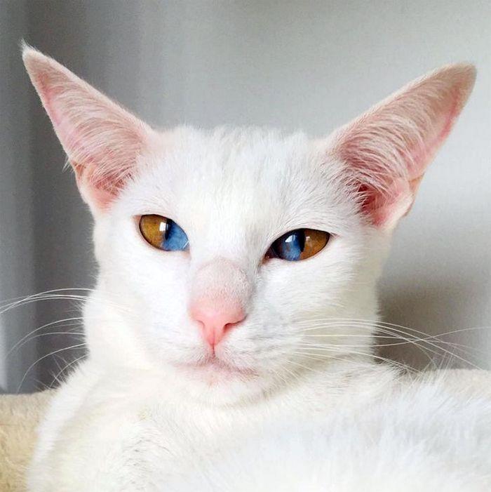 39 gatinhos que tem características únicas 11