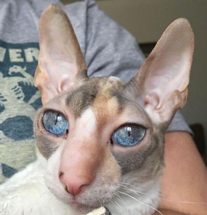 39 gatinhos que tem características únicas 13